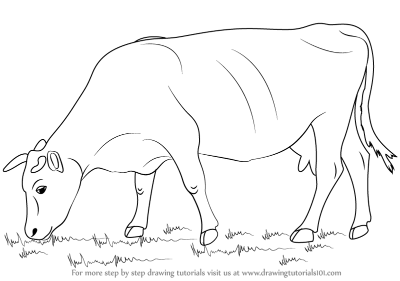 Learn how to draw a cow farm animals step by step drawing tutorials
