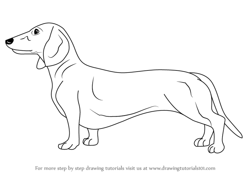 Line Drawing Dachshund : Dachshund coloring pages adult sketch page