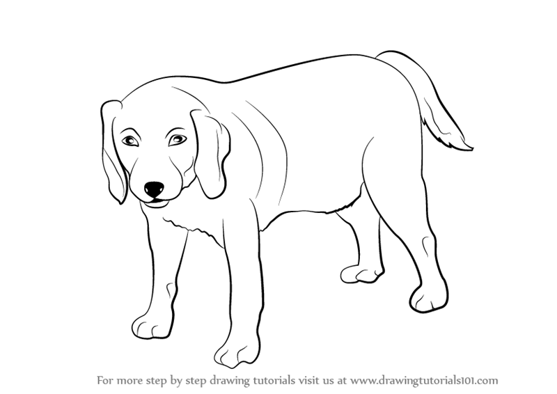 Learn how to draw a dog farm animals step by step drawing tutorials