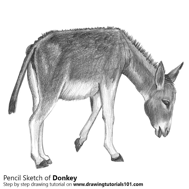Donkey pencil drawing how to sketch donkey using pencils drawingtutorials101 com