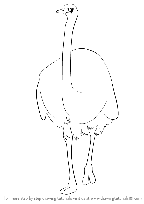Line Art Emui : Learn how to draw a emu farm animals step by