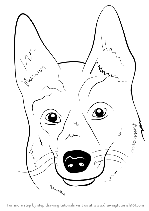 Line Drawing Dog Face : Learn how to draw german shepherd dog face farm animals