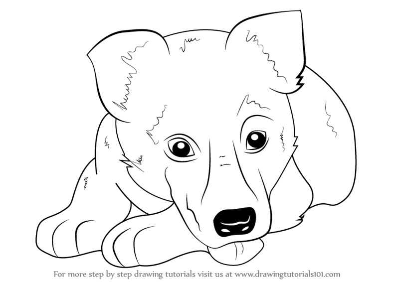 Learn How to Draw German Shepherd Puppy Farm Animals Step by