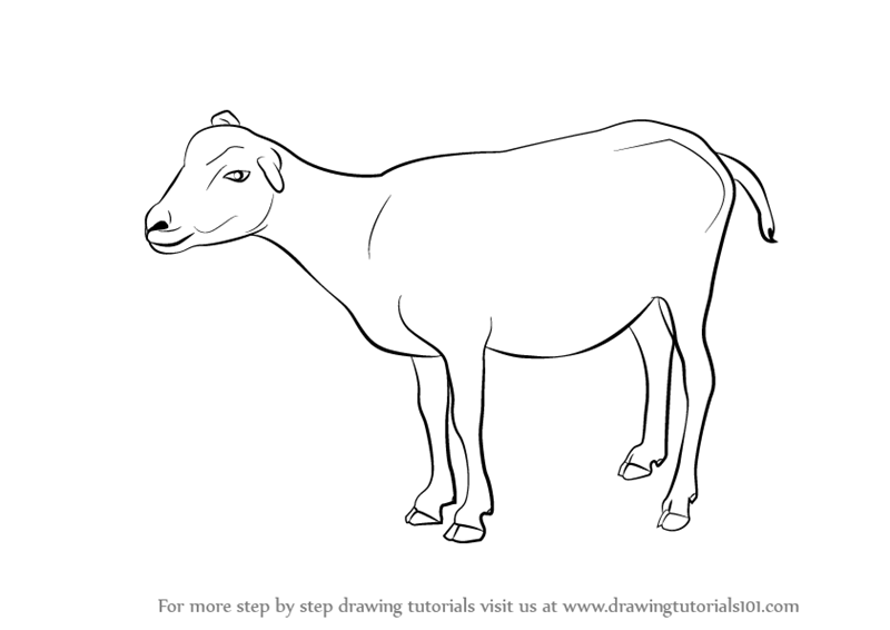 Learn How to Draw a Goat (Farm Animals) Step by Step