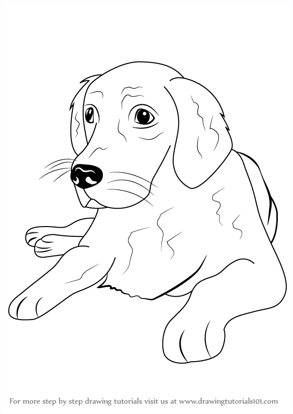 Learn How To Draw A Golden Retriever Farm Animals Step