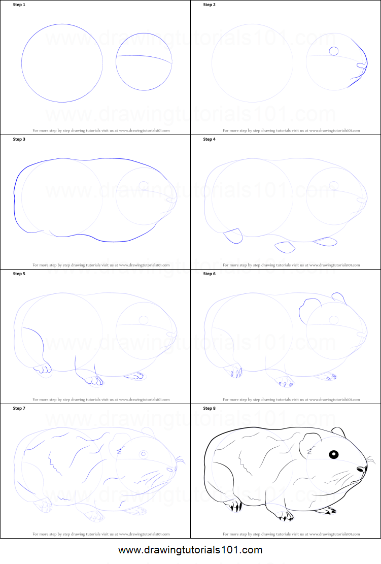 how to draw a guinea pig printable step by step drawing