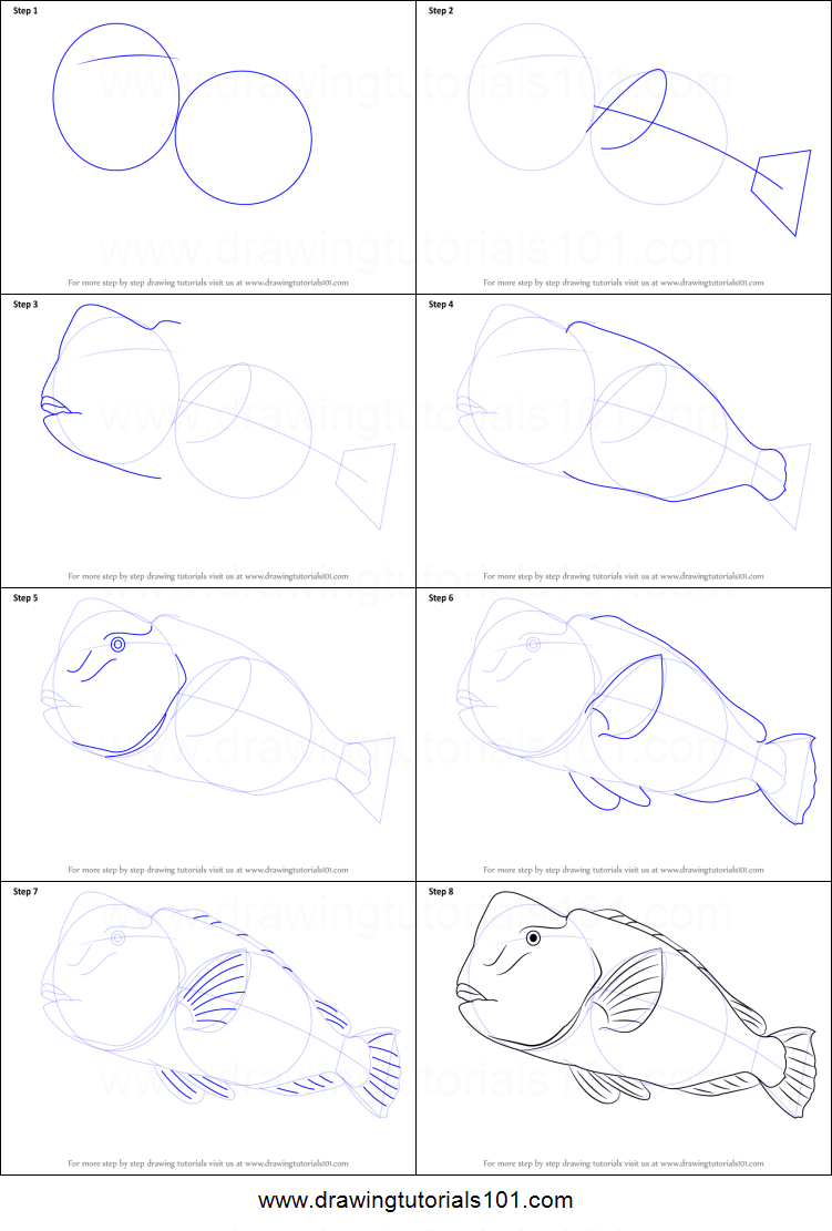 how to draw a parrot fish