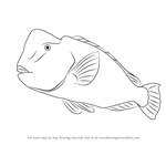 How to Draw a Humphead Parrotfish