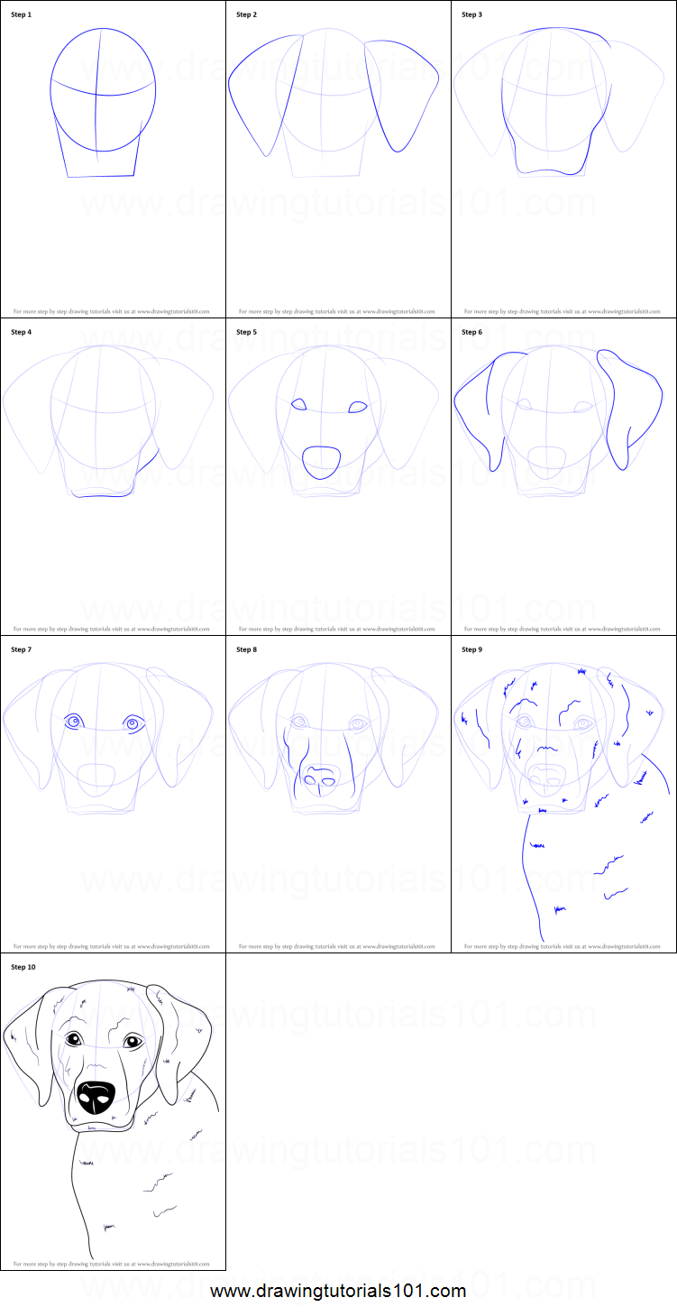 How To Draw A Labrador Face Printable Step By Step Drawing Sheet Drawingtutorials101 Com