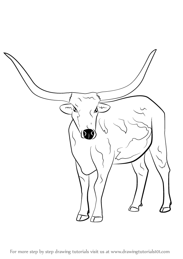 Learn How To Draw A Longhorn Cattle Farm Animals Step By Step