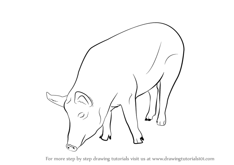 learn how to draw a pig farm animals step by step drawing tutorials