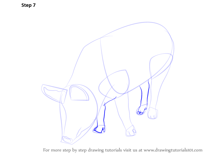 How To Draw A Pig Step By Step Easy