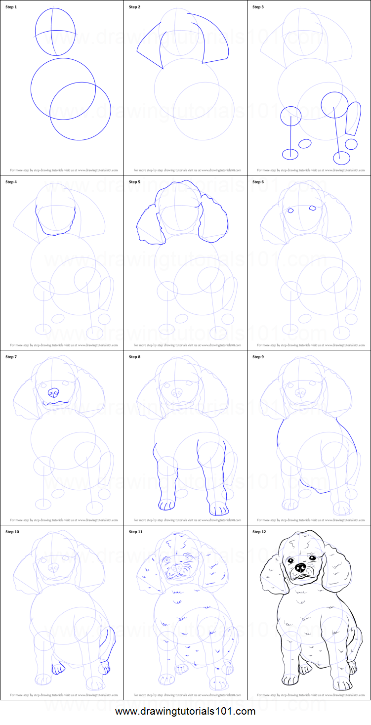 How To Draw A Poodle Dog Printable Step By Step Drawing