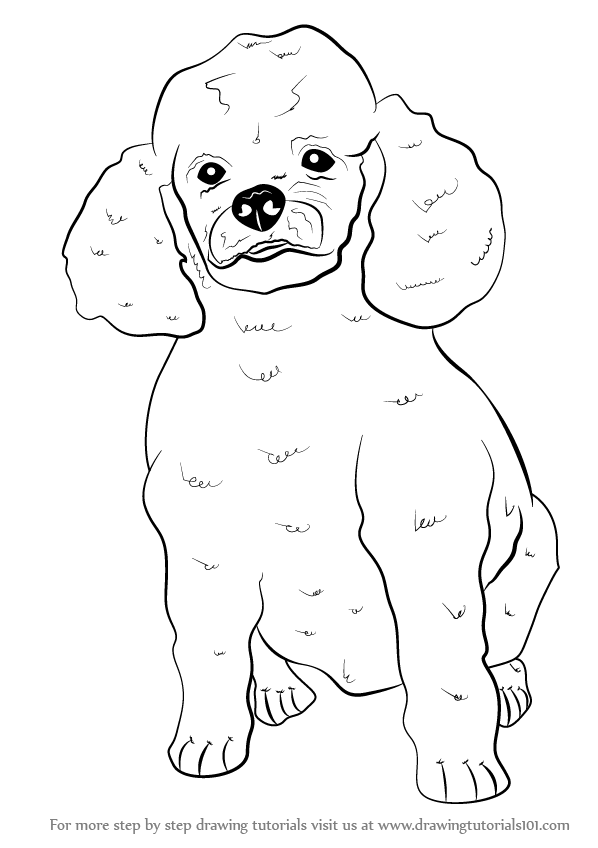 Learn How To Draw A Poodle Dog Farm