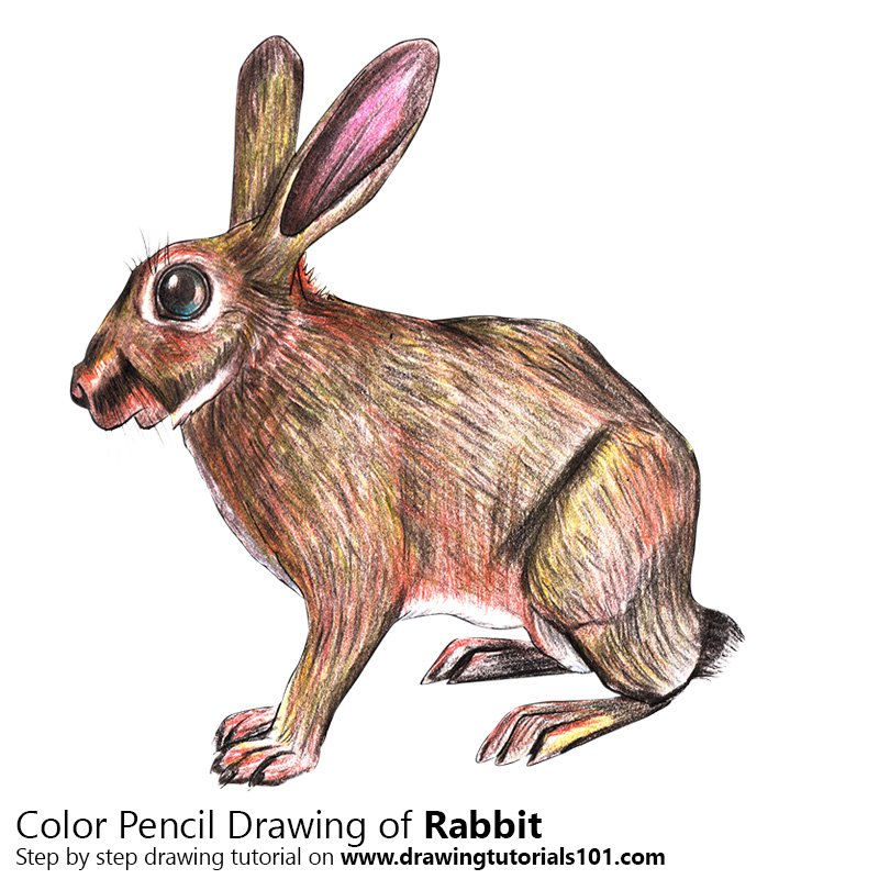 Rabbit Colored Pencils  Drawing Rabbit with Color Pencils