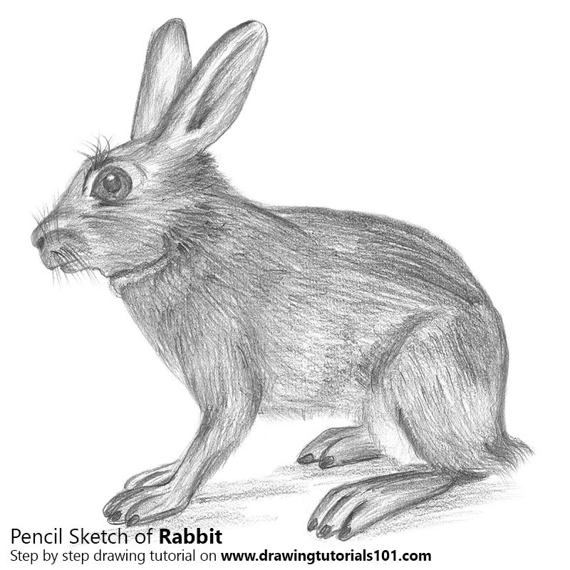 rabbit pencil drawing how to sketch rabbit using pencils
