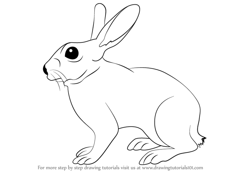 Learn how to draw a rabbit farm animals step by step drawing tutorials