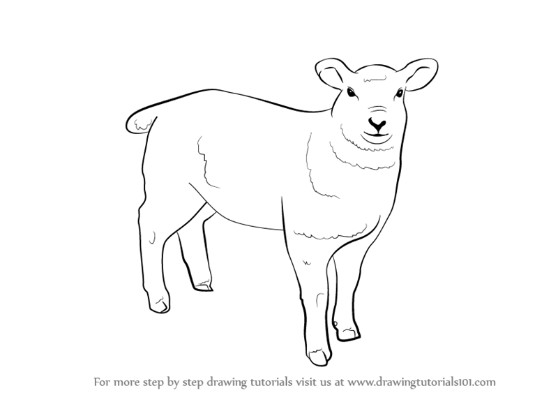 How to draw a sheep - photo#24