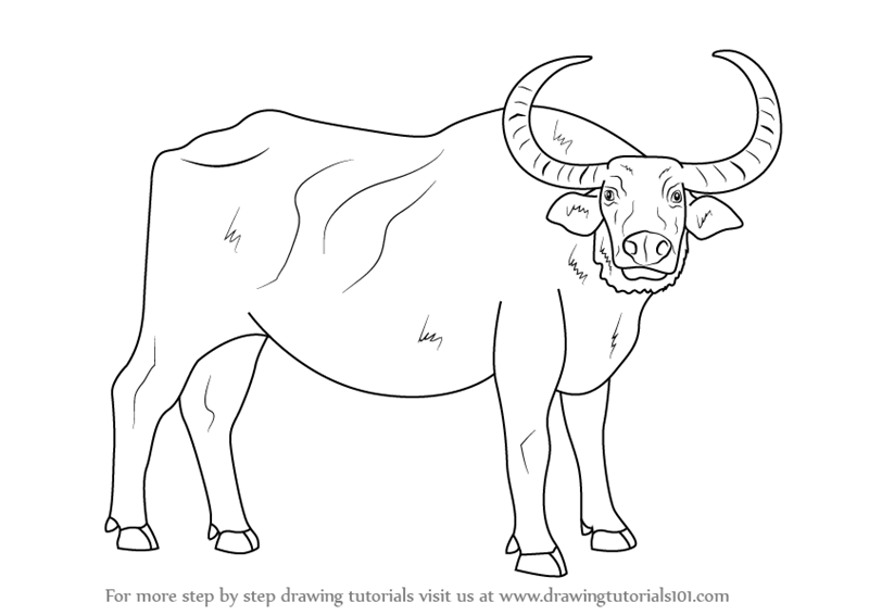 Line Drawing Of Water Animals : Learn how to draw a water buffalo farm animals step by