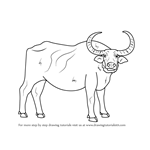 How to Draw a Water Buffalo