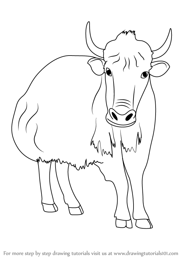 Learn How To Draw A Yak Farm Animals Step By Step Drawing Tutorials