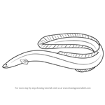 How to Draw an American Eel