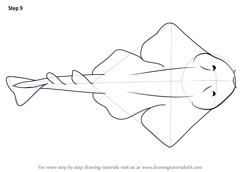 Learn How To Draw An Angel Shark Fishes Step By Step