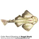 Angel Shark Color Pencil Sketch