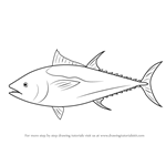 Learn how to draw an atlantic bluefin tuna fishes step for Tuna fish coloring page