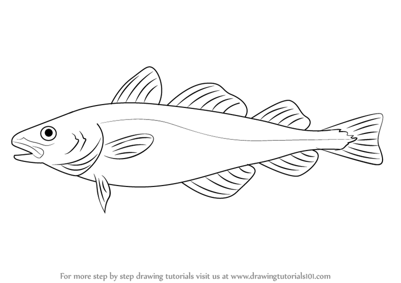 ... How to Draw an Atlantic Cod (Fishes) Step by Step : Drawing Tutorials