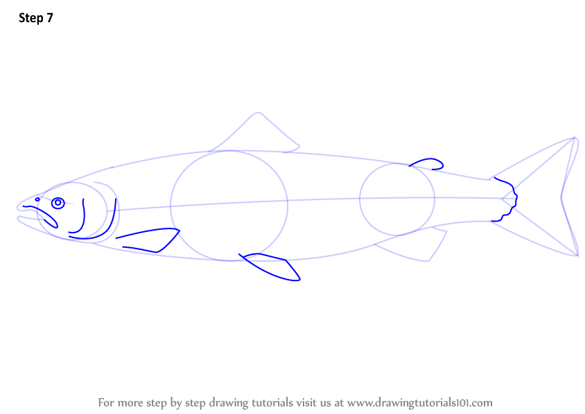 Learn How to Draw an Atlantic Salmon (Fishes) Step by Step : Drawing ...