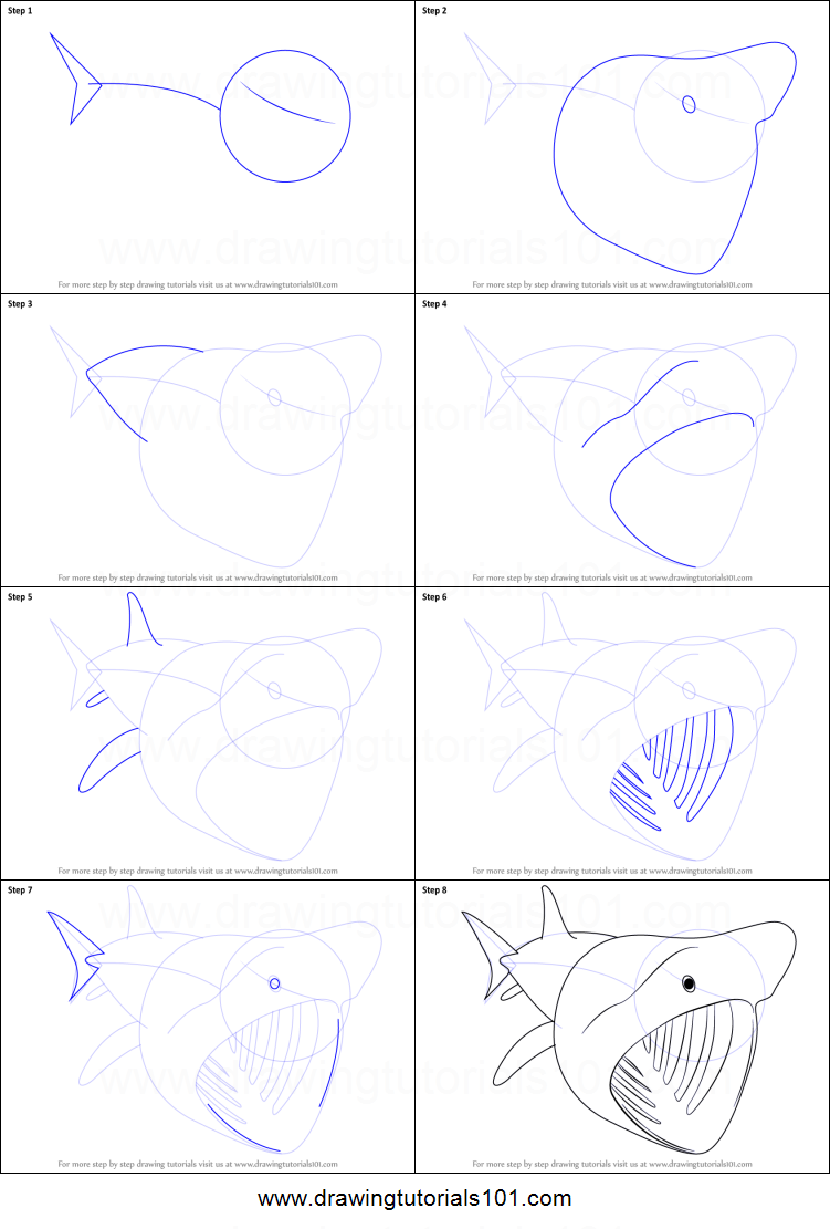 Step by step drawing tutorial on how to draw a basking shark