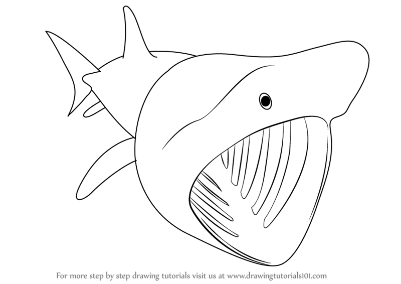Learn how to draw a basking shark fishes step by step drawing tutorials