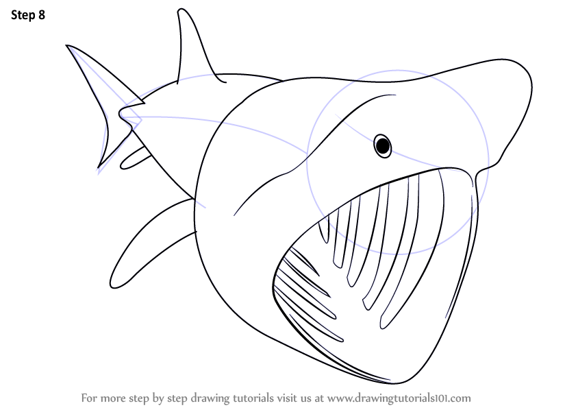 Line Drawing Shark : Learn how to draw a basking shark fishes step by