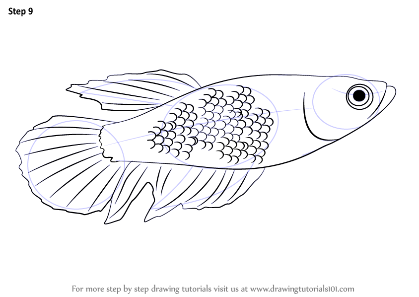 Learn How To Draw A Betta Fishes Step By Step Drawing Tutorials