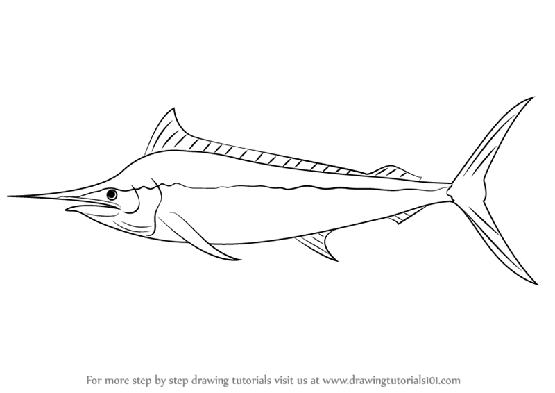 Learn How To Draw A Black Marlin Fishes Step By Step