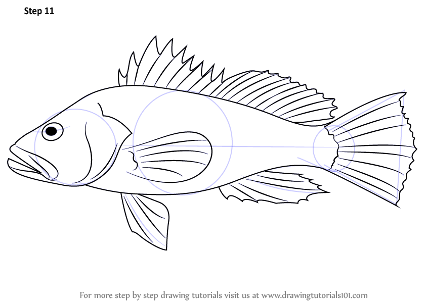 learn how to draw a black sea bass fishes step by step