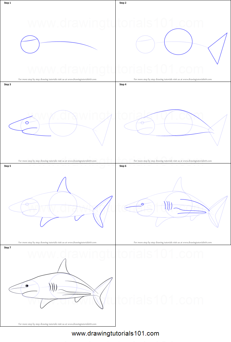 How to Draw a Blacktip Shark printable step by step ...
