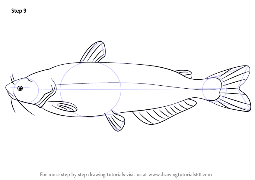 Learn How To Draw A Blue Catfish Fishes Step By Step Drawing