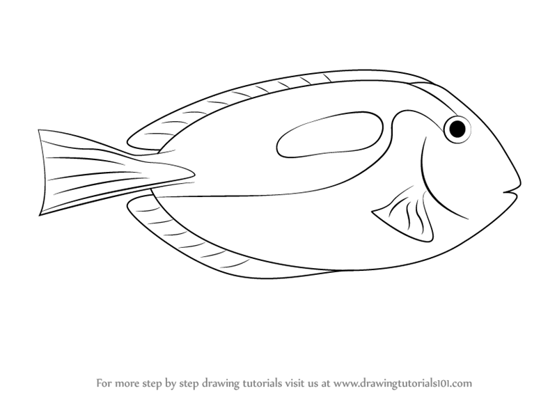 Learn How to Draw a Blue Tang (Fishes) Step by Step