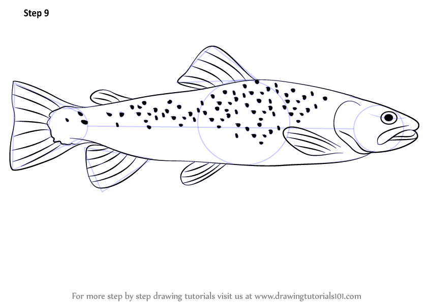 learn how to draw a brown trout  fishes  step by step catfish clip art black and white free catfish clip art black and white