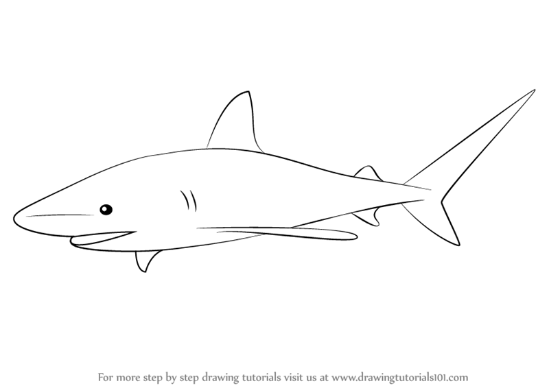Learn how to draw a bull shark fishes step by step drawing tutorials