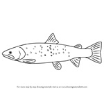How to Draw a Bull Trout