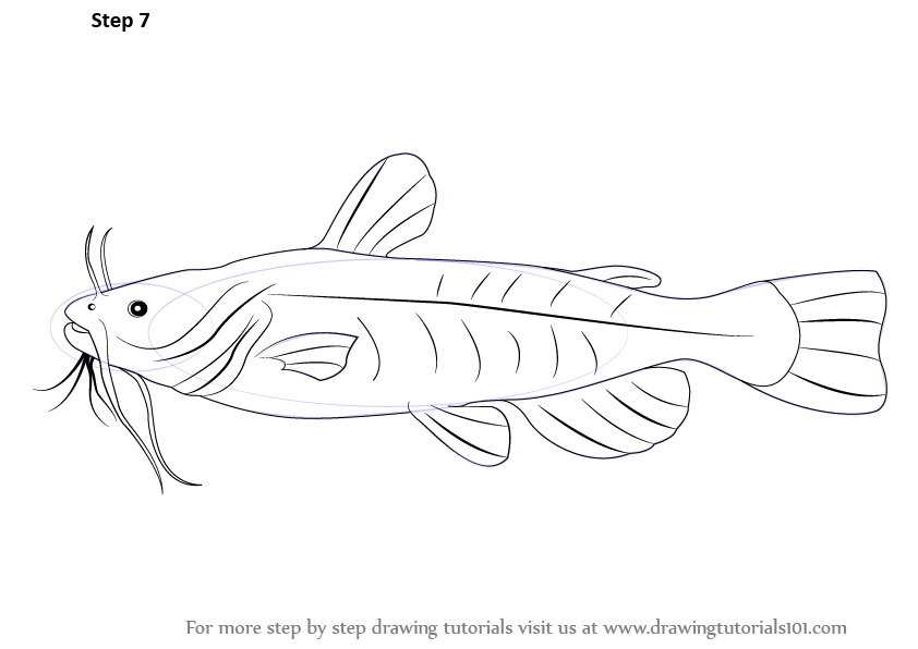 learn how to draw a bullhead fish  fishes  step by step
