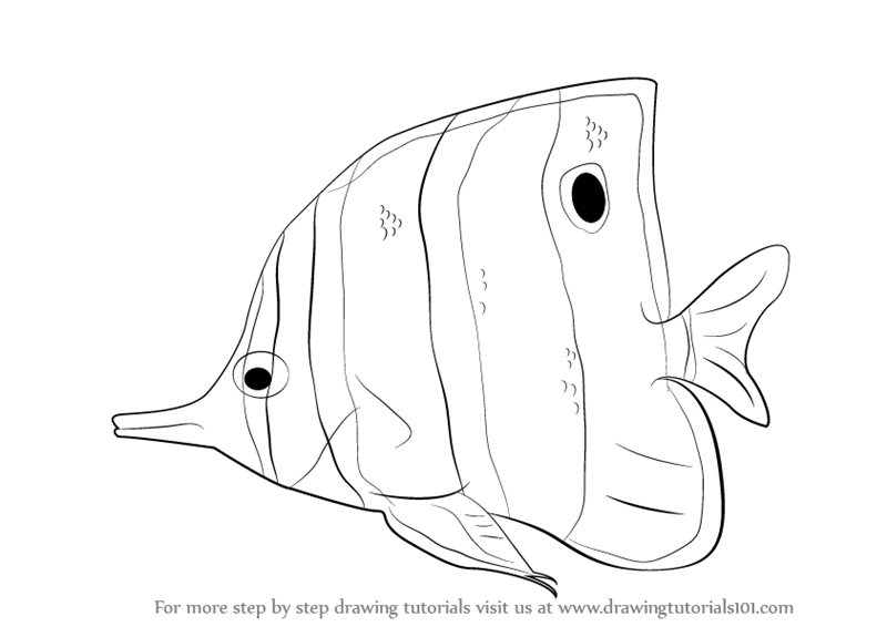 learn how to draw a butterflyfish fishes step by step drawing tutorials