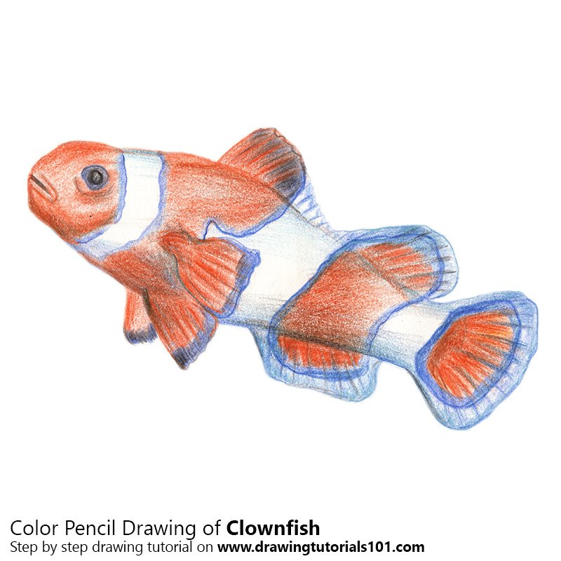 clownfish colored pencils drawing clownfish with color pencils