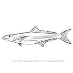 How to Draw a Cobia