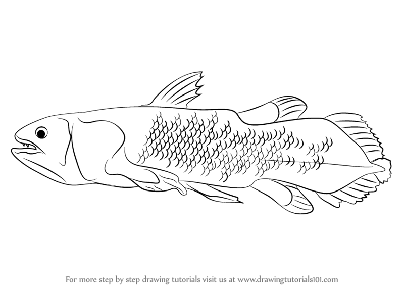 learn how to draw a coelacanth  fishes  step by step