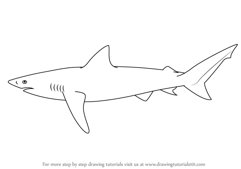 Step by step how to draw a copper shark drawingtutorials101 com
