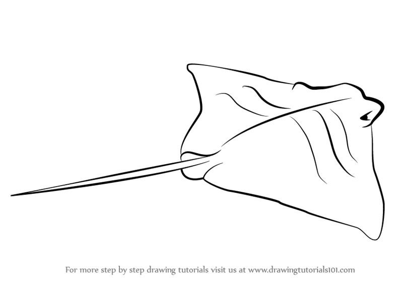 learn how to draw a cownose ray  fishes  step by step